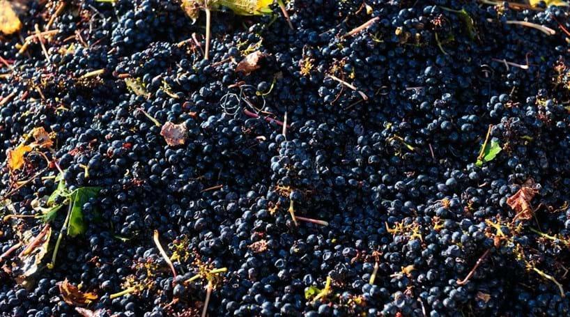 ASAE apreende 50 mil litros de mosto de uvas