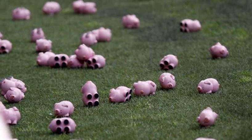 Adeptos atiram porcos em protesto