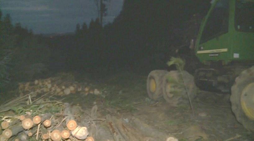 Homem morre esmagado por árvore