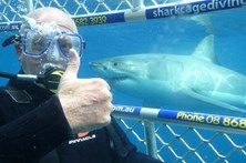 Selfies radicais com tubarões brancos