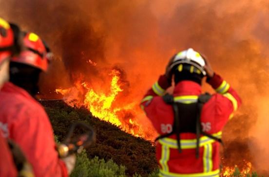 Câmara de Seia abre conta solidária para apoiar vítimas dos incêndios