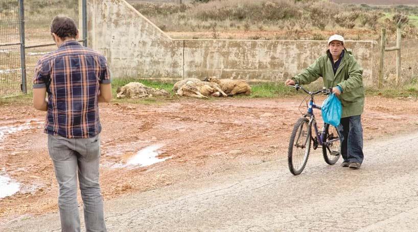 Seis ovelhas mortas por cães abandonados