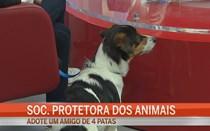 Sociedade Protetora dos Animais