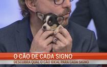 O cão de cada signo