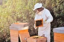 Clima fez cair produção de mel