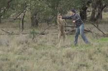 Homem dá murro a canguru para defender cão