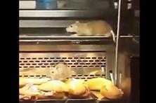 Vídeo de ratos em vitrina de padaria encerra estabelecimento