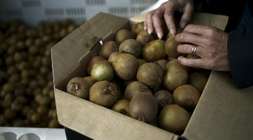 Agricultor oferece duas toneladas de kiwis