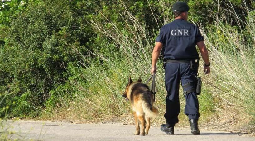 Autoridades controlam acessos a Foz Côa para encontrar menina de nove anos