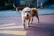 Cães mortos por envenenamento geram indignação