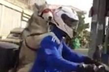 Cão radical filmado em mota na Tailândia