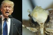 Traça descoberta na Califórnia tem nome de Donald Trump