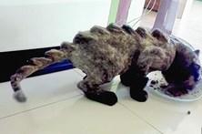 'Dinogatos' fazem sucesso na Tailândia