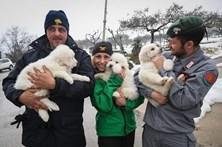 Três cachorros resgatados dos escombros de hotel atingido por avalanche