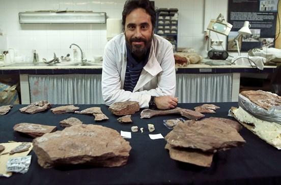 Português acha réptil primitivo na Gronelândia