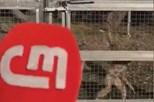 'Macaco' volta a exibir microfone roubado à CMTV