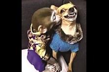 Chihuahua ataca macaco que o tenta 'assediar'