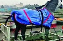 Cavalo de plástico amarrado gera confusão