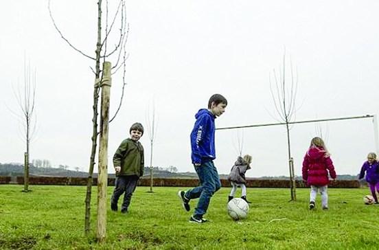 Árvores são o novo adversário das crianças