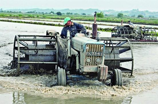 País vai ter arroz para diabéticos