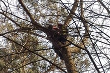 Gato resgatado de árvore