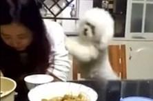Cão empurra dona para pedir comida