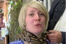 Cabeleireiro oferece massagem de... cobra