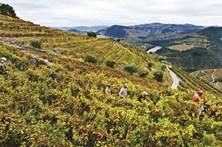 Douro contra plantação de 150 hectares de vinha