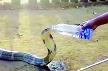 Aldeão mata sede a cobra