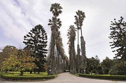 Os jardins botânicos das grandes cidades