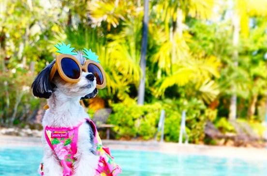 Cadela ganha quase mil euros por cada publicação no Instagram