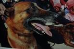 Polícia despede-se de cão em mensagem tocante