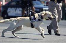 Pede cão polícia para recuperar droga