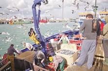 Peixe vendido em lota rende 47 milhões