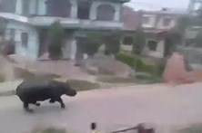 Ataque de rinoceronte faz um morto e três feridos