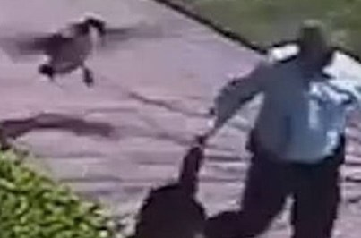 Polícia atacado por ganso foge a correr
