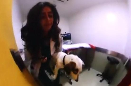 Cães Tecnológicos