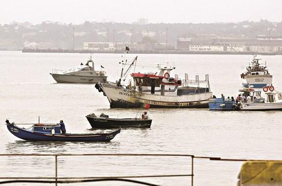 Sável e lampreia estão em risco