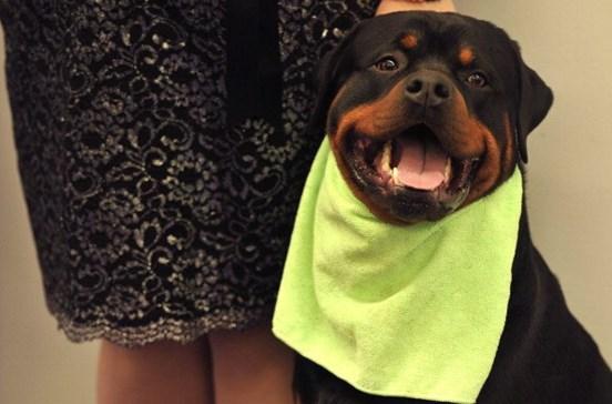 Formação para donos de cães perigosos arranca em outubro