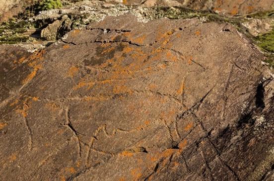 Vandalizaram figura rupestre do parque arqueológico de Foz Côa