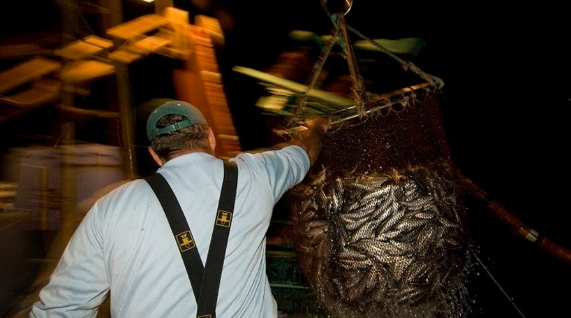 Pescadores queixam-se de falta de carapau e cavala