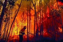 GNR detém jovem de 19 anos suspeito de atear fogos em Idanha-a-Nova