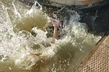 Leão-marinho abocanha criança e leva-a para o rio