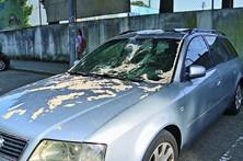 Ramo de árvore destrói carros em Famalicão