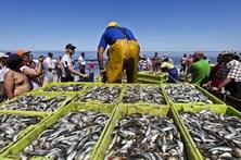 Governo autoriza pesca e compra dejaquinzinhos