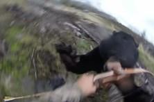 Caçador filma ataque de urso negro