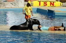 Jardim Zoológico de Lisboa comemora 133 anos