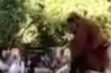 Orangotango foge de recinto em Zoo