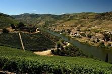 Governo garante apoio a viticultores do Douro