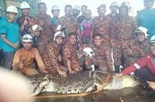 Crocodilo de umatonelada morre após ser salvode uma barragem